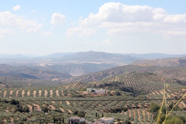 surrounded-by-olive-groves