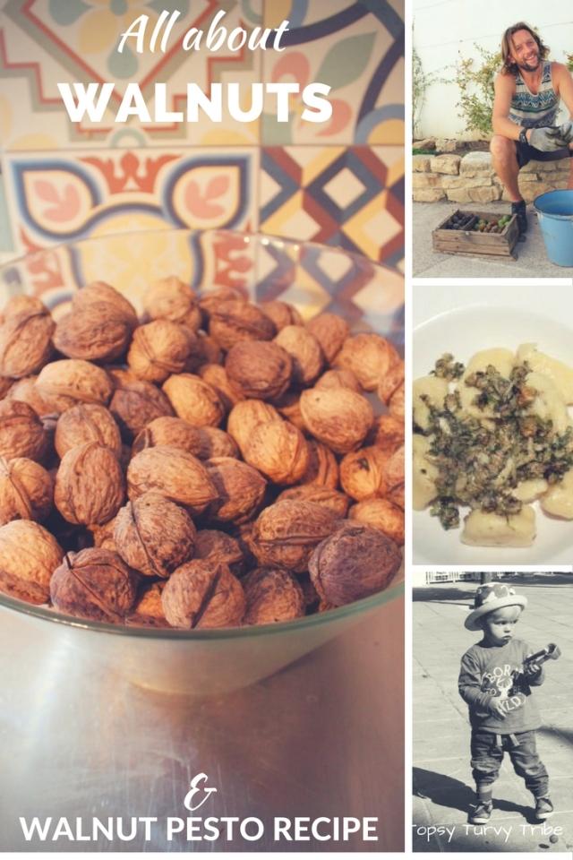 walnuts-all-about-walnuts-and-walnut-pesto-recipe