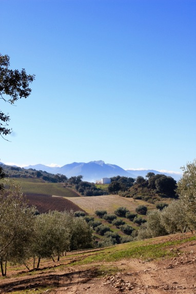 The endless Olive Groves