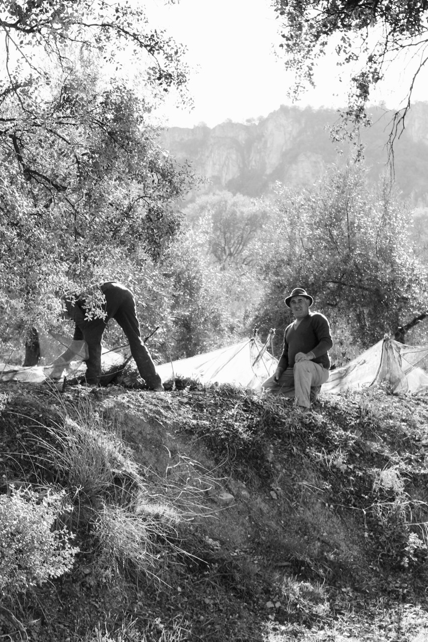 The Olive Pickers
