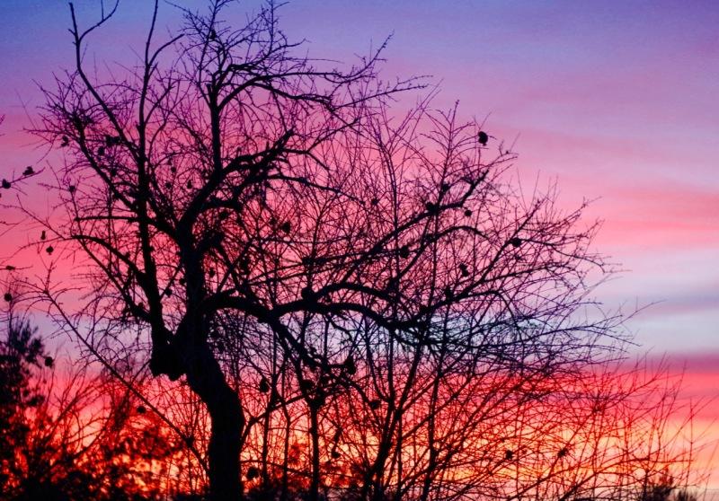 #My Sunday Photo - Pomegranate Sunset