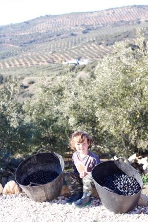 olivepicker